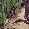 arizona | mister zimi