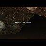 Trailer mananadepesca