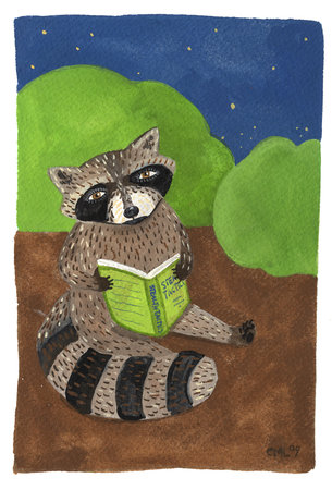 reading raccoon large
