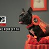 MTV 'The Perfect 10'