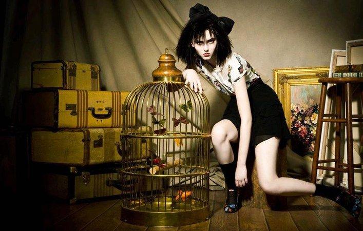AG Birdcage