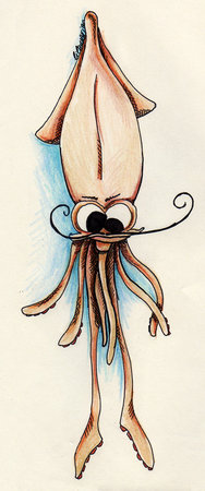 male squid
